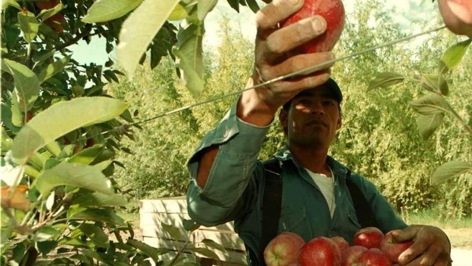 Estiman que hay 5,5 millones de empleos que dependen del agro en Argentina