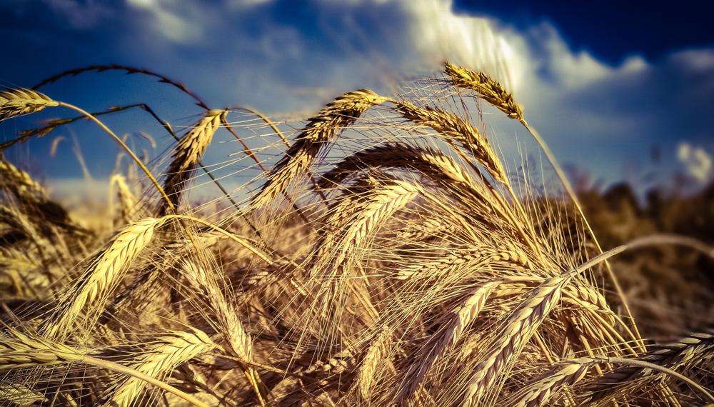 Una mirada estratégica al sector agropecuario argentino