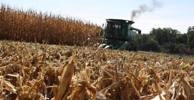 INTA: Consejos para obtener mejores rendimientos en cosecha de Soja y Maíz