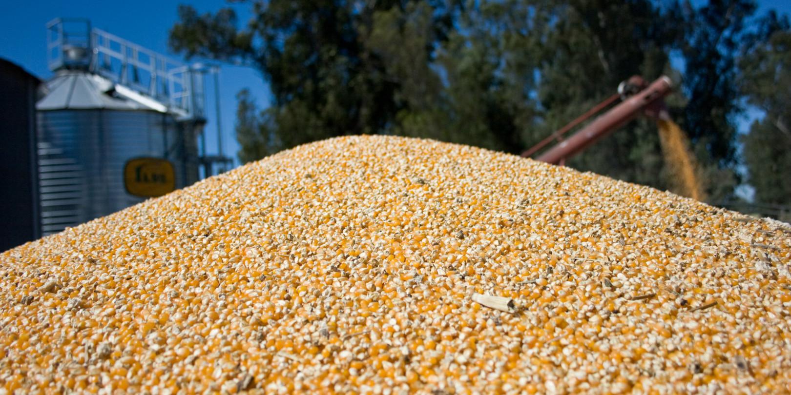 Argentina consigue un nuevo record histórico de exportación de maíz y consolida su proceso de transformación local
