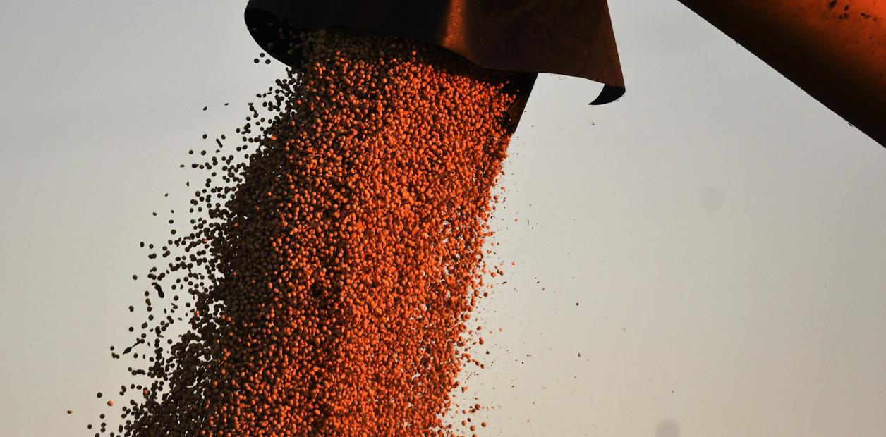 Para la Bolsa de Rosario, la cosecha 2018/19 fue de 141,5 millones de toneladas