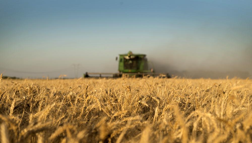 Recta final: concluyen la cosecha de trigo y la siembra de la soja y el maíz