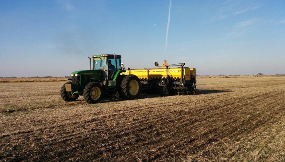 El trigo ingresa a la etapa final de siembra con más del 90% del área implantada