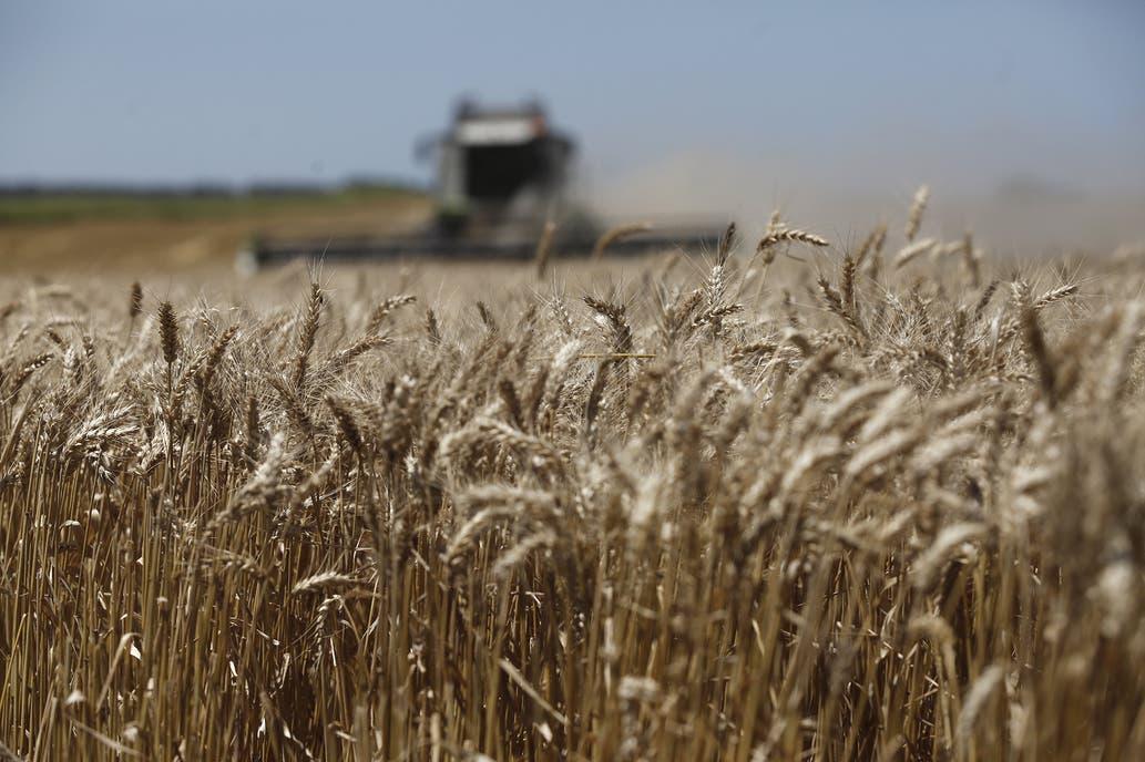 Los molinos sostienen al trigo