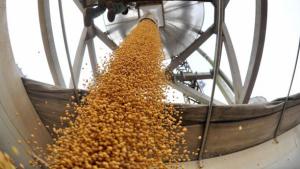 El procesamiento de soja de julio cayó 21,3% respecto a 2019